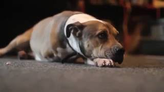 Хозяин усыпляет свою собаку