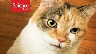 Crazy-faced cats don't win the adoption game