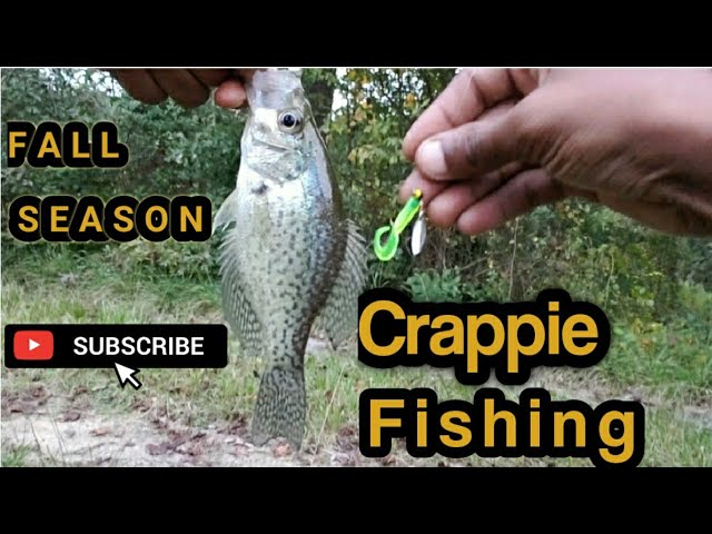 Fall Season Crappie Fishing Using A Hammered Nickel Jig #FishNWithMaYo #Crappie #Youtube