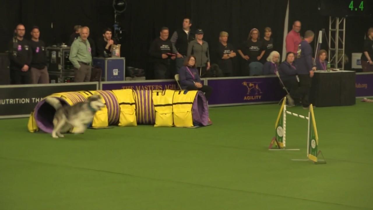 Dog Agility Training Las Vegas