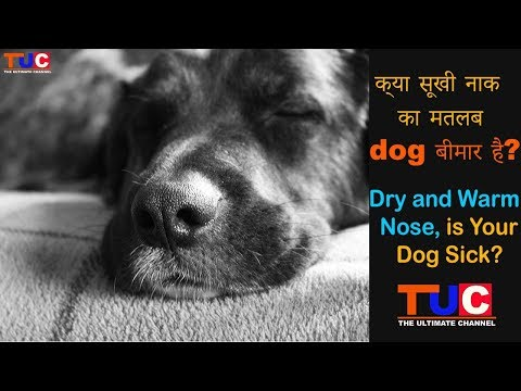 Warm And Dry Nose, Is Your Dog Sick? : Dog Tips : The Ultimate Channel