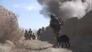 Explosive Detection Dog Searches For Ied's In Afghanistan - Dogs At War