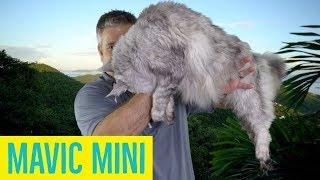 Mavic mini Initial Impressions