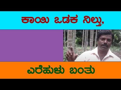 Mr Shankar from chitradurga started growing Areca nut using Dr Soil