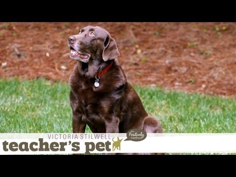 Learning the Stay Cue | Teacher's Pet With Victoria Stilwell