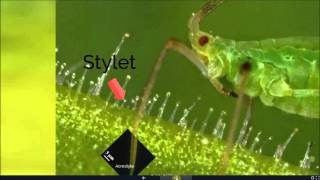 A novel antiviral strategy against Cauliflower mosaic virus utilizing plant-mediated RNAi