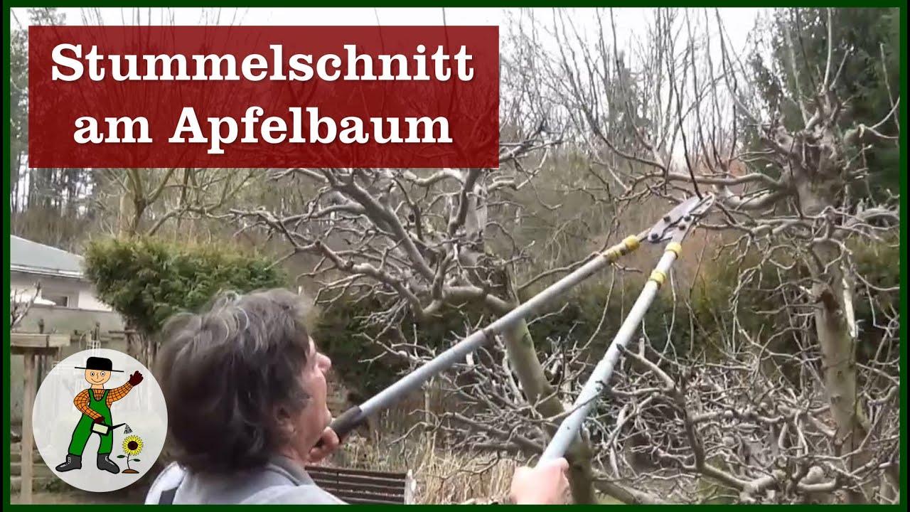Apfelbaum Schneiden Stummelschnitt Youtube