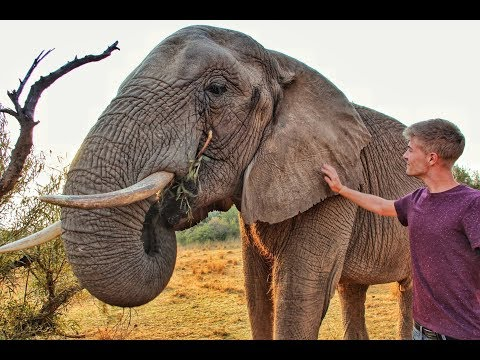 Volunteer with Big Cats in South Africa     Glen Afric     Travel Experience
