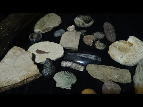 Asmr/ Whispering Fossil Collection