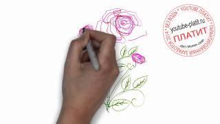 Роза  Как нарисовать розу карандашом поэтапно(Как нарисовать розу поэтапно простым карандашом за короткий промежуток времени. Видео рассказывает о том,..., 2014-06-27T06:53:25.000Z)