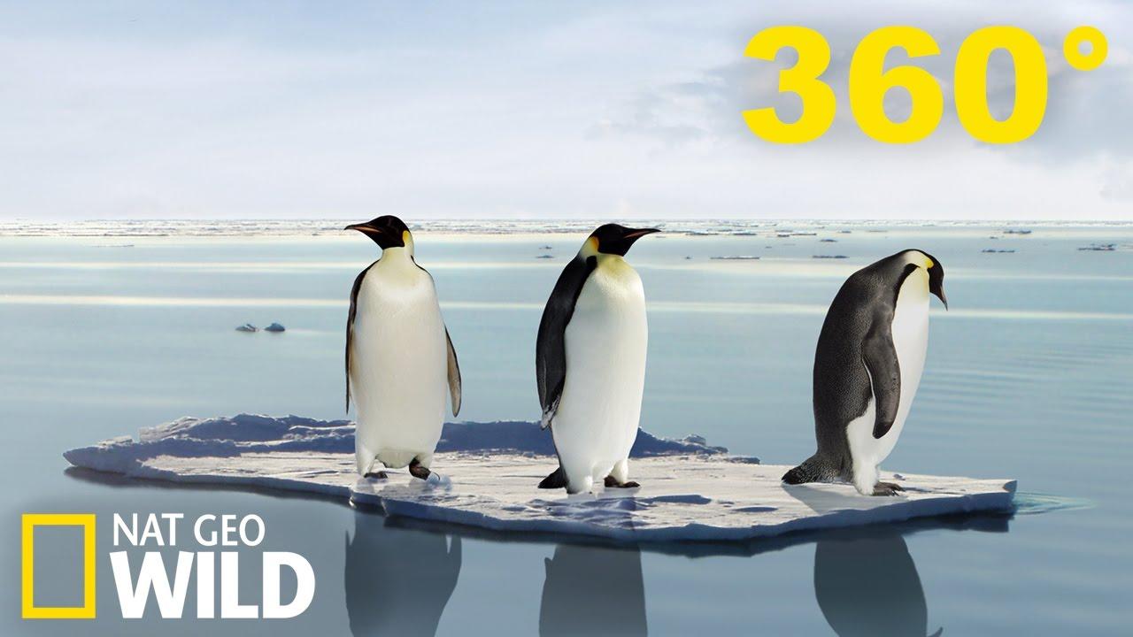 Vidéo 360° Exploration de manchots et de phoques en Antarctique