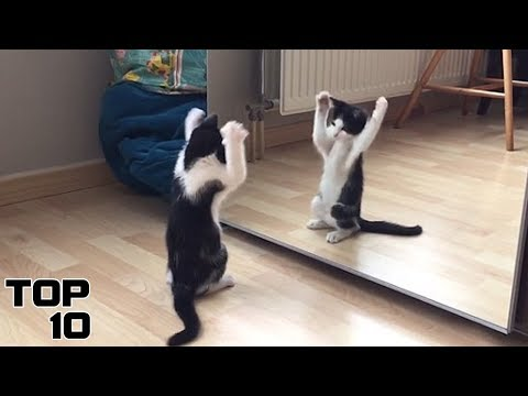 Top 10 Funniest Animal Mirror Reactions