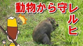レルヒさんと学ぼう! 野生動物とともに暮らすには?