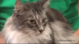 2014 Cat Show at the Hall County Fair