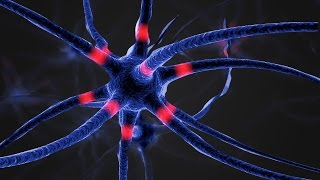 Лаборатория молекулярной нейродегенерации (ЛМН) thumbnail
