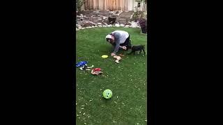 Logan plays
