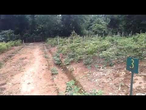 kavling-produktif-medalsari-garden-kebun-durian-bawor-loji-karawang(1)