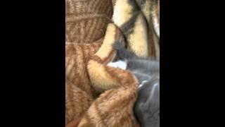 Котенок смотрит фильм
