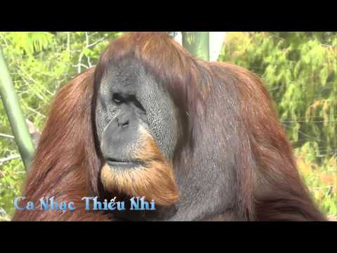 Ca Nhạc Thiếu Nhi HD2 (Thăm vườn bách thú)
