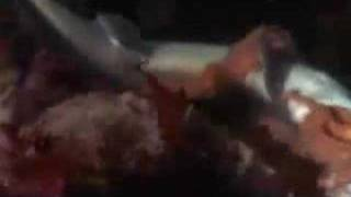 Mystery - Sharks Missing at Seattle Aquarium