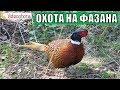 Охота на фазана ЛУЧШЕЕ ИСПОЛНЕНИЕ Videoohota mp3