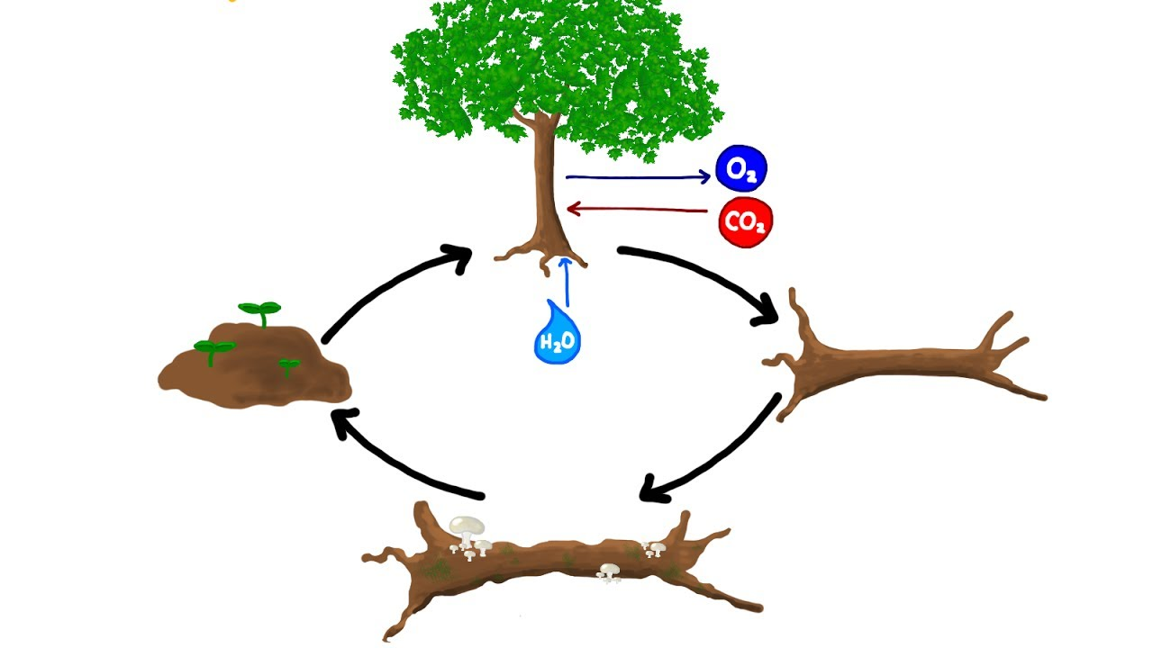 Bailey Rinal's Blog |Wastewater Nutrient Cycle