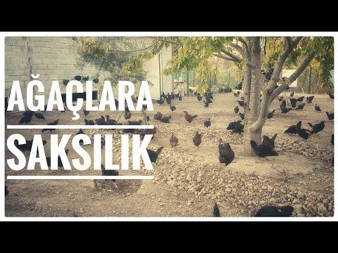 Taşlar Tamam -  Tavuk Çiftliği, Ataks,Salma Tavukçuluk,Gezen Tavuk Yumurtası