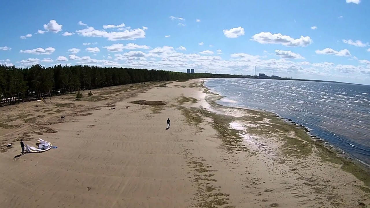 Пляж в сосновом бору 5