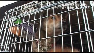 実録「犬のお願い」 ※一部ショッキングな映像が含まれています