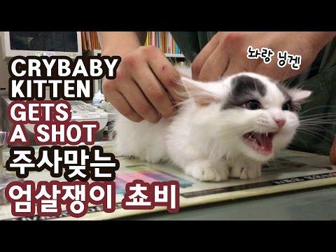 주사 맞는 아기고양이 쵸비 엄살왕 CRYBABY KITTEN GETS A SHOT