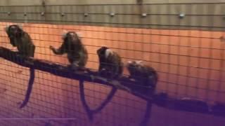 Черный рынок экзотических животных в Подмосковье