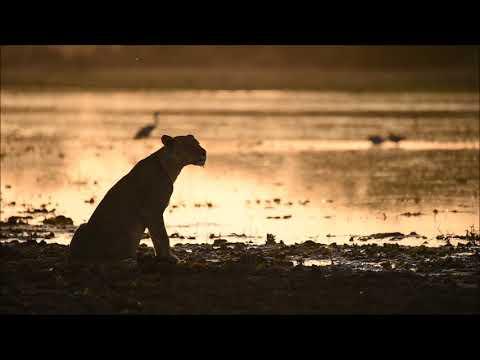 Zakouma National Park   Conservation in Chad