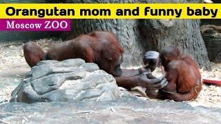 Орангутан мама и веселый малыш