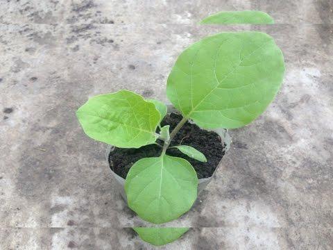 Когда высаживать рассаду в открытый грунт / Календарь высадки рассады