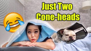 what-to-do-when-your-french-bulldog-is-injured-vlog