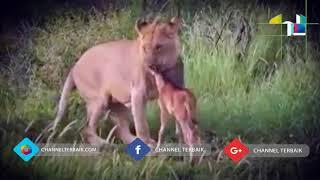 di jamin tersentuh 5 aksi hewan yang menyelamatkan hewan lainnya