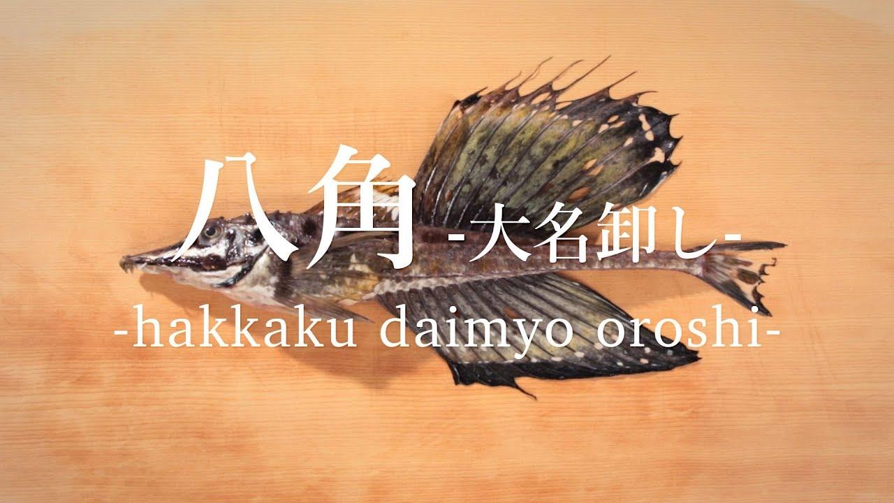 八角(はっかく)のさばき方:大名卸し , How to filet Sailfin poacher ,|日本さばけるプロジェクト