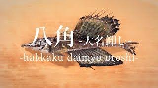 八角(はっかく)のさばき方:大名卸し - How to filet Sailfin poacher -|日本さばけるプロジェクト