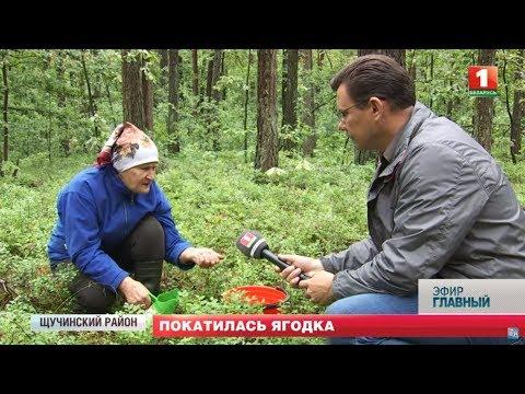 Сезон сбора ягод стартовал в Беларуси. В 2019 году изменены правила. Главный эфир