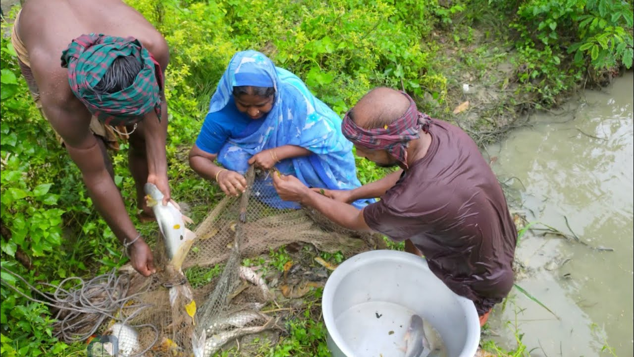 Traditional Catching Big Catfish By Cast Net in Village Pond - Catching Big Catfish