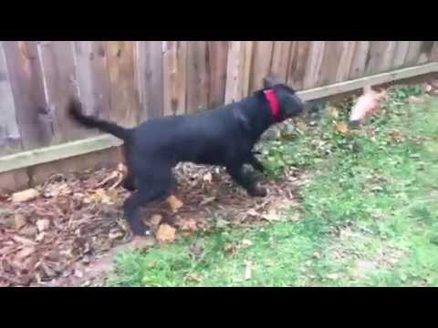 Dog Is Scared To Death Of A Horse Head Squirrel Feeder Youtube