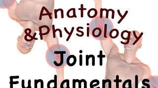 vuclip Joints and Articulations : Joint Fundamentals (08:05)