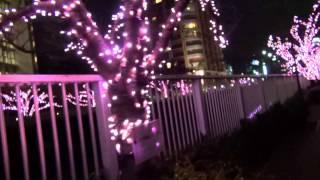 目黒川の「冬の桜」のイルミネーションです。 まだ認知度が低いのか?あ...