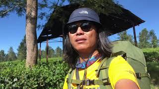 Download Video Kupas Tuntas Jalur Arjuno Via Lawang (Lincing) MP3 3GP MP4
