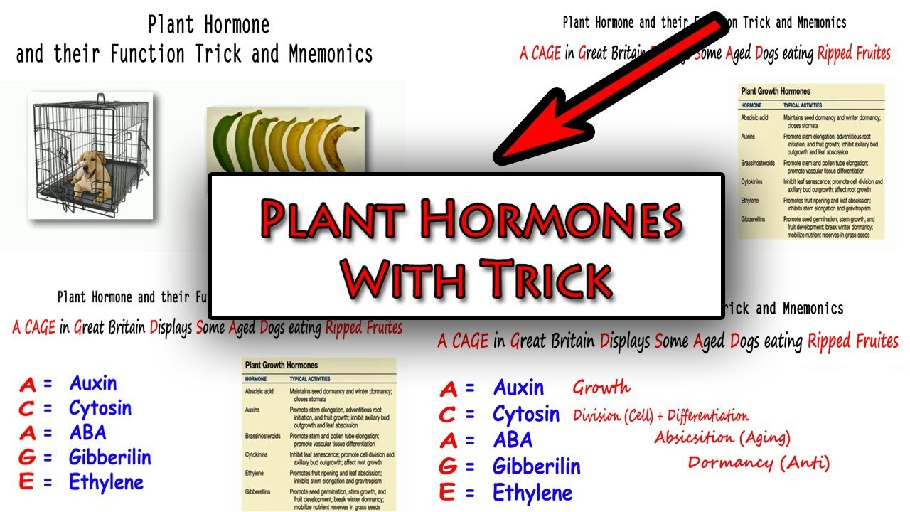 Plant Hormones And Their Functions Learn With Trick Hindi