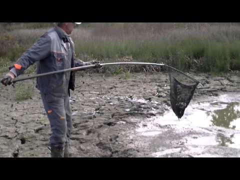 Русловый пруд на реке Веле Wikimapia