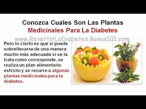 PLANTAS MEDICINALES PARA LA DIABETES - YouTube