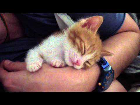 Thumbnail for Cat Video Kitten Sleeps After Kisses
