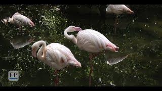 Führung durch den Chemnitzer Tierpark: Homosexualität im Tierreich