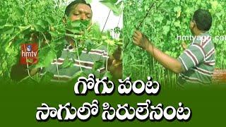 గోగు పంటసాగులో సిరులేనంట | Gogu Cultivation High Profits | Hmtv News
